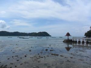 13. pesisir selatan